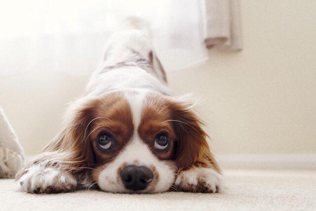 Om hundar kunde prata
